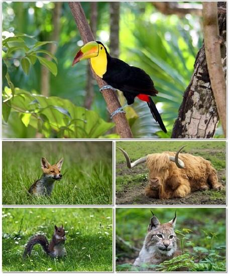 Веселые картинки с животными для фона рабочего стола 113