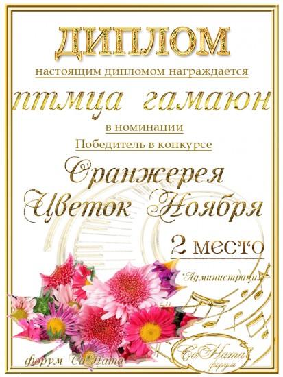 """Поздравляем победителей конкурса """"Оранжерея. Цветок Ноября""""! 4d07f80a1c1e5c3b2ae49d60e1eb4415"""