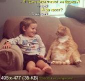 Позитивные котэ и их друзья (11.11.14)