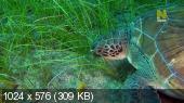 ������ - ������� �������� / Cheetahs Of The Deep (2013) HDTVRip-AVC | DUB