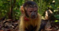 ��������: ���������� �� ��������� / Amazonia (2013) BDRip 720p