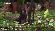 Тайный сад (2014) HDTVRip AVC
