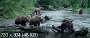 Земля медведей (2013) HDRip