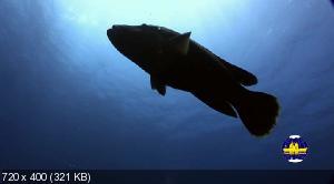 ��������� �������� ���� / Deep Sea (2007) BDRip �� HQ-ViDEO