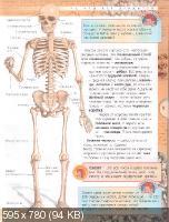 Александр Мирер - Анатомия человека (2008)