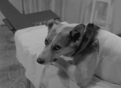 Собачье сердце (2 серии из 2) (1988) DVDRip от MediaClub {Android}