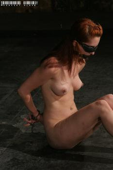 20090204 Calico Slave