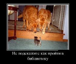 Подборка лучших демотиваторов №219